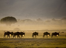 Tanzania: Not just the Serengeti