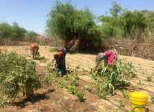 Unlocking Women's Potential in Turkana