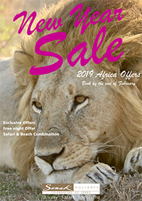 New Year Sale brochure