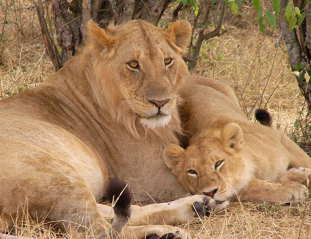 safari and wildlife image