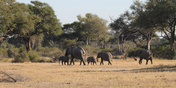Elephants in Hwange