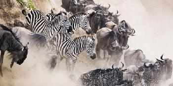 the_great_migration_safari