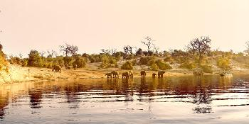 chobe_national_park