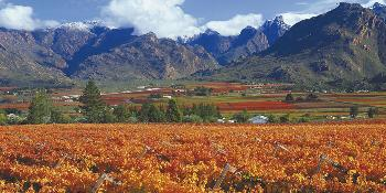 winelands_tour_(full_day)