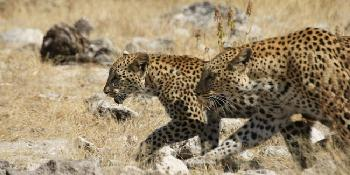 etosha-national-park-self-drive