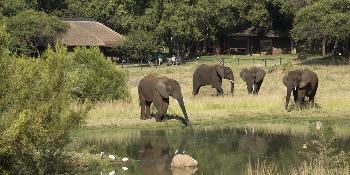 bakubung_bush_lodge