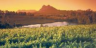 Winelands at sunset