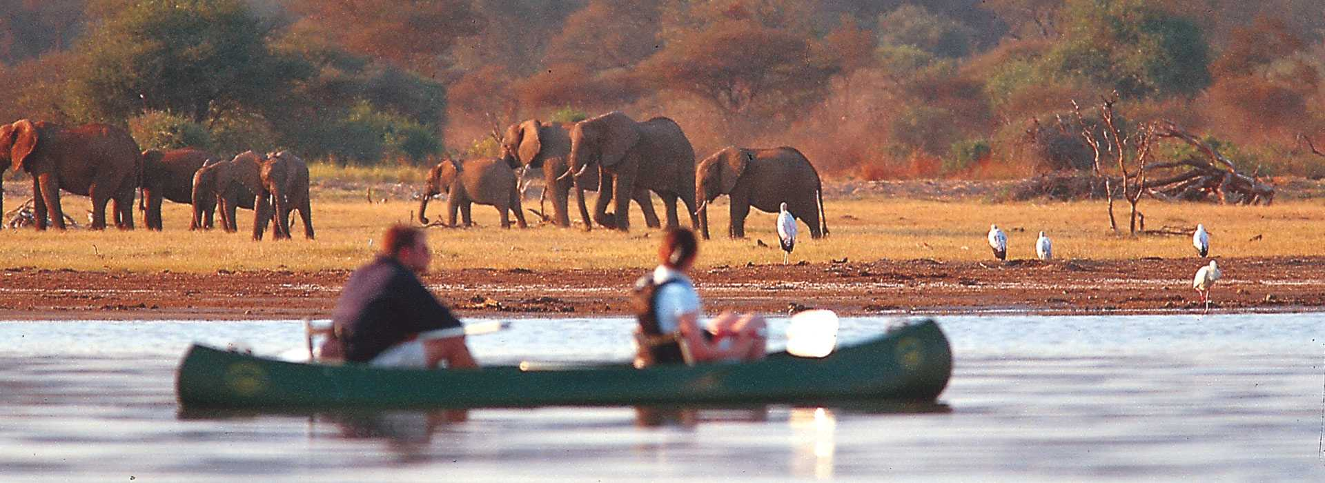 Canoeing Alongside A Herd Of Elephants