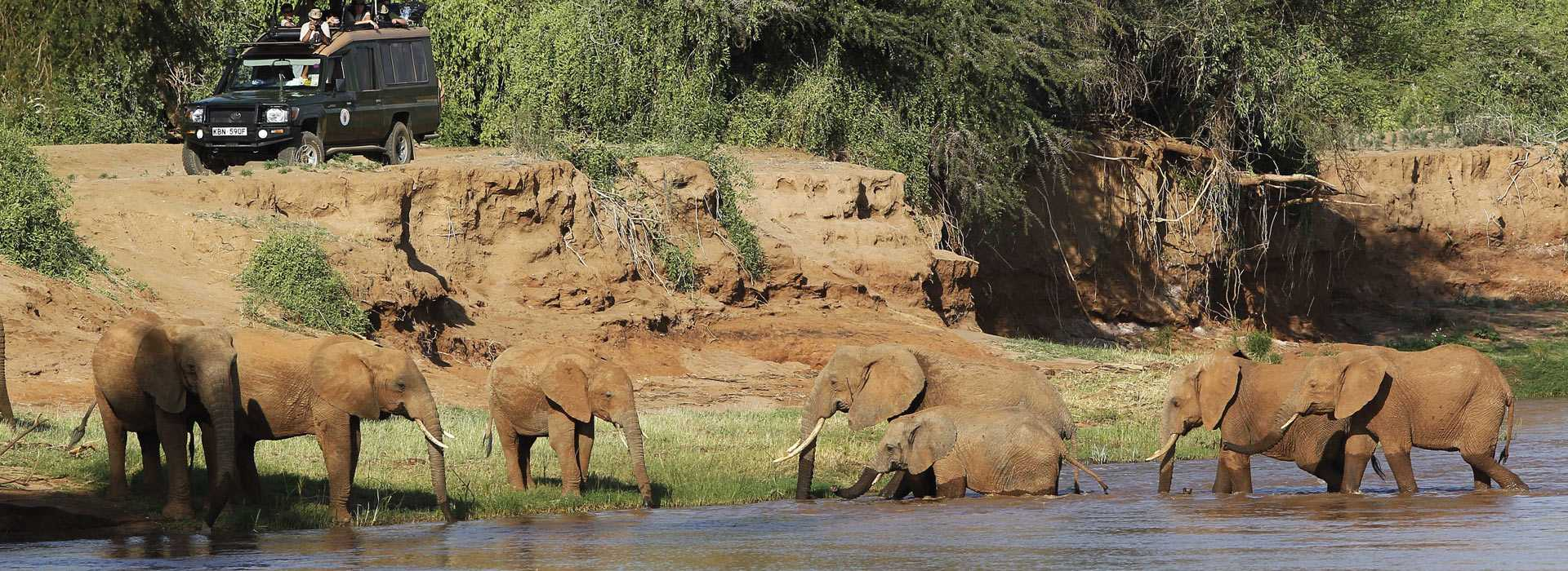 Elephants Bathing In Samburu, Kenya