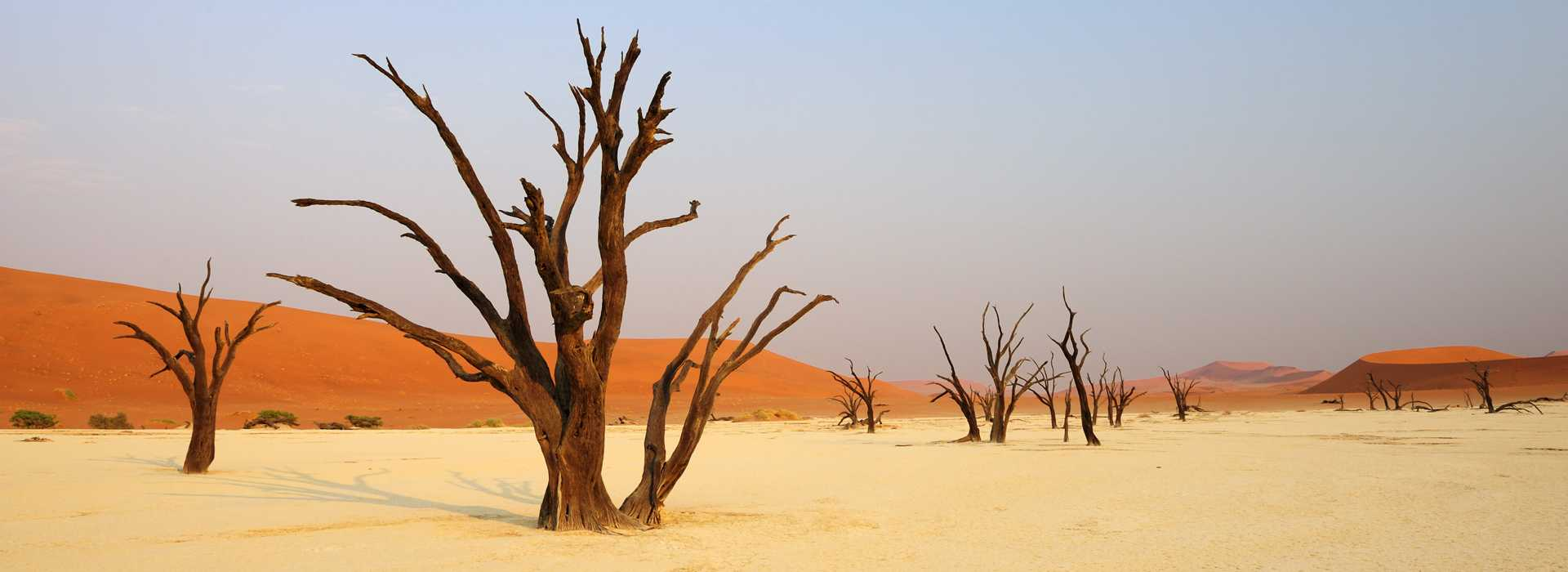Dead Trees In Front Of Red Sand Dune