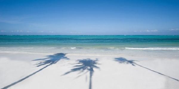 Shadows of palm trees on a Zanzibar beach