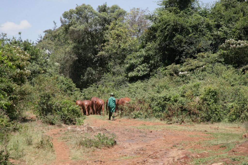 Kenya elephant orphanage