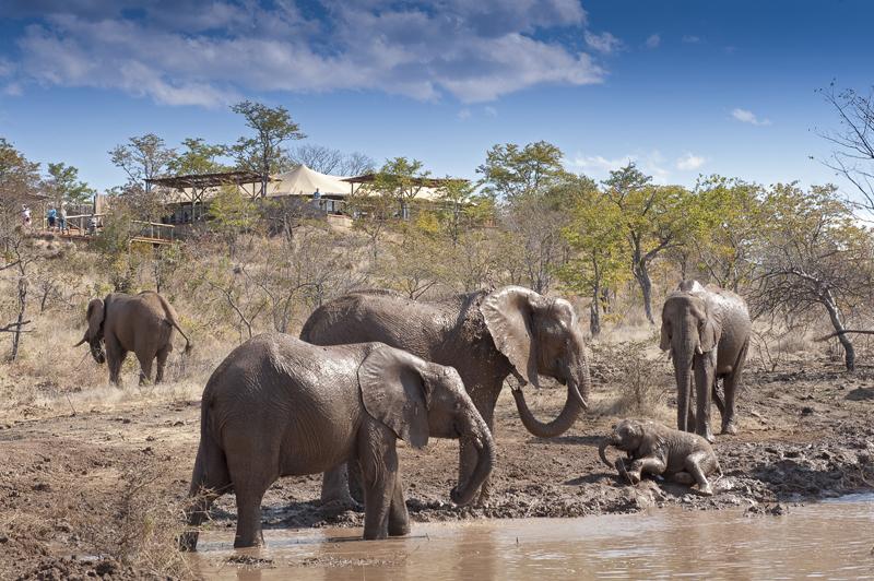 Elephants in the mud in Hwange national park, Zimbabwe