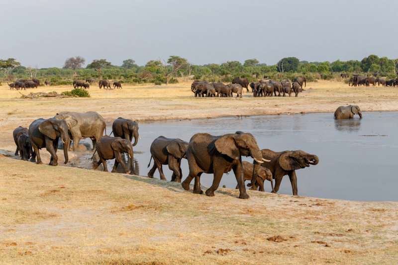 Herd of elephants in Hwange national park, Zimbabwe