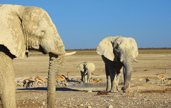 Elephants in Etosha, Namibia
