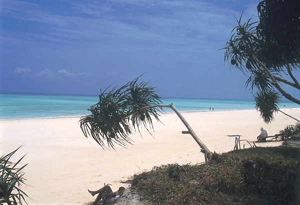 Beach with palm trees in Mombasa, Kenya