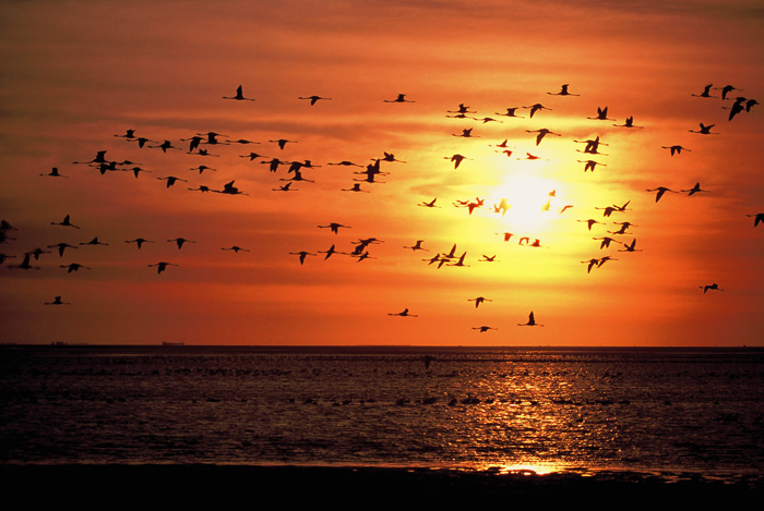 Flock of birds at sunset in Namibia