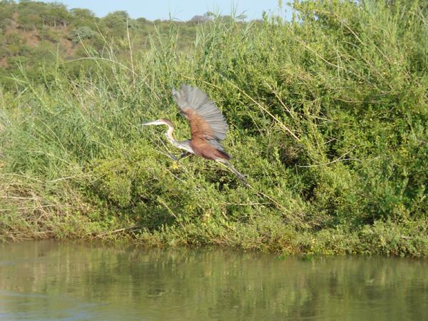 Bird in flight over the river