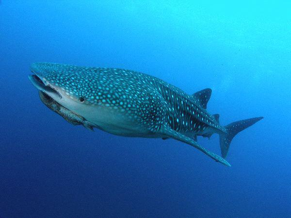 Diving in Zanzibar and Mozambique