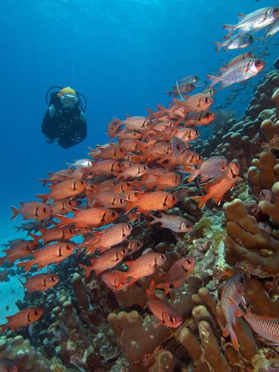 A diver and colourful fish in Zanzibar