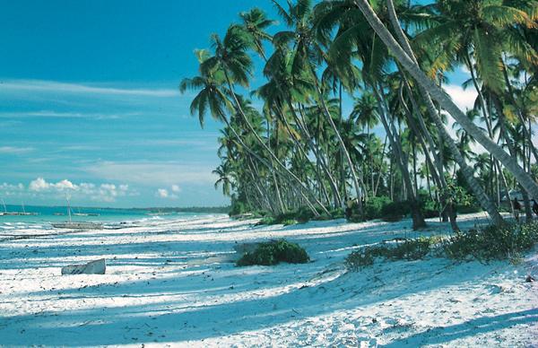 Lots of palm trees on a beach in Zanzibar