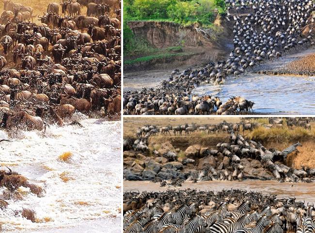Kenya/Tanzania migration