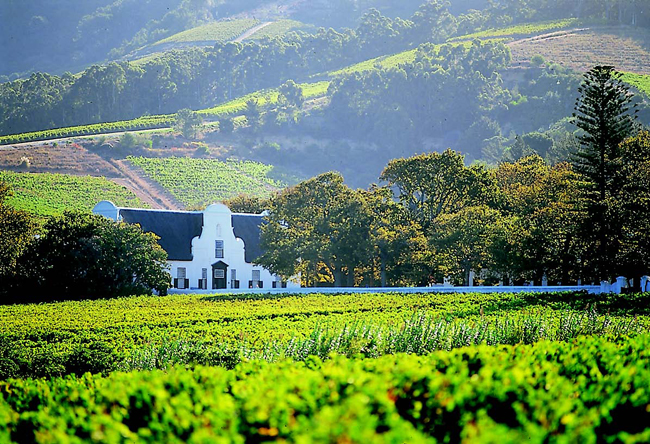 Vineyard at the Winelands, South Africa
