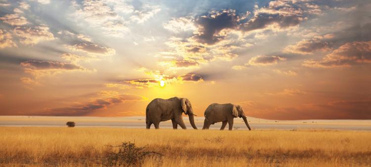 Elephants at sunset in Chobe National Park, Botswana