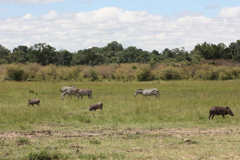 Animals in Kruger National Park, South Africa