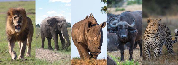 The Big 5 Animals