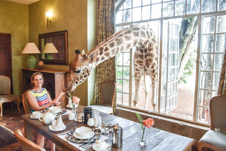 Giraffe poking head through window at breakfast at Giraffe Manor, Kenya