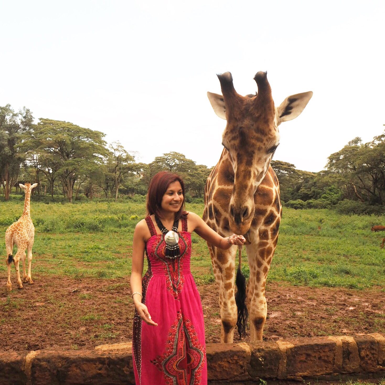 Hand feeding a giraffe at Giraffe Manor, Kenya