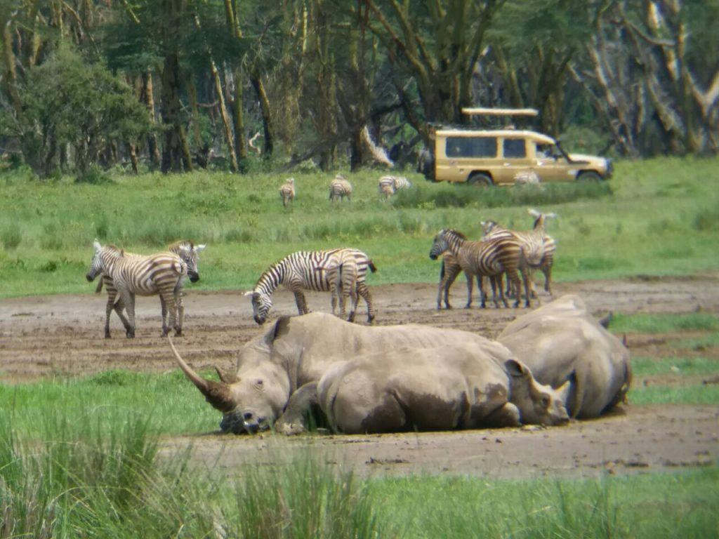 rhinos and zebras in Kenya