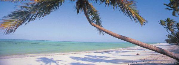 Palm tree on Zanzibar beach