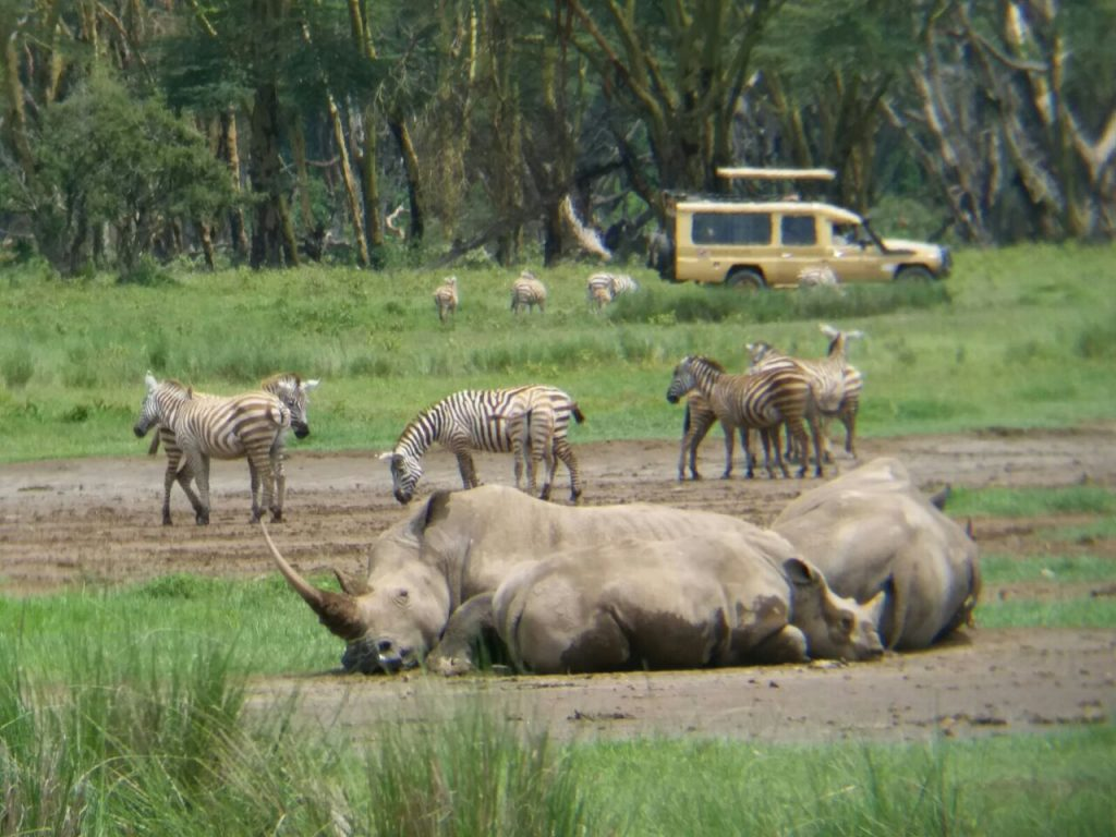 Rhinos and zebras in Kenya