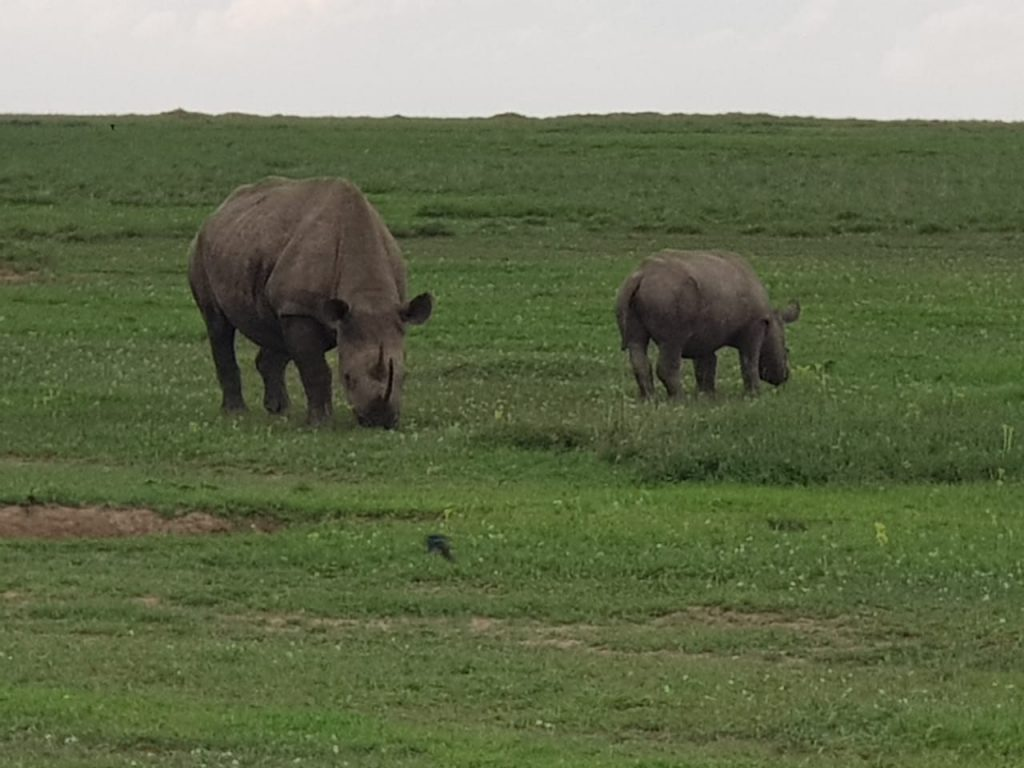 Two rhinos on the Kenya plains