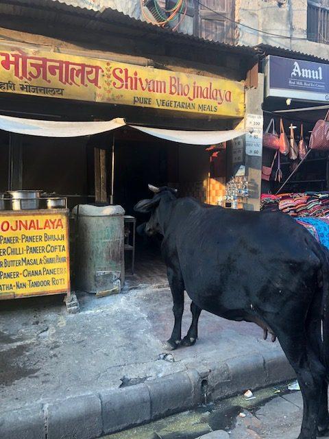 Cow on the street in Varanasi