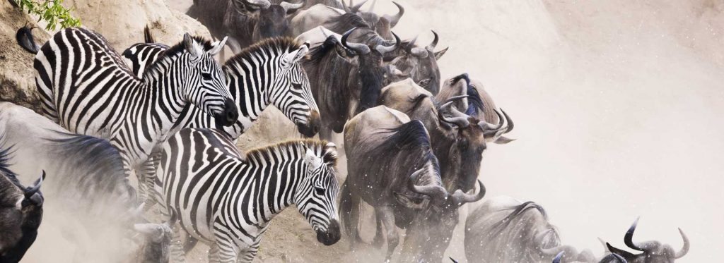 Great Migration in the Serengeti, Tanzania