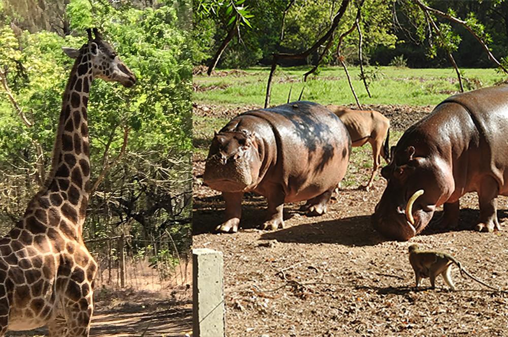 Animals at Haller Park