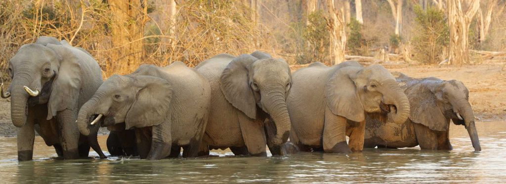 Elephants at Mana Pools on holiday in Zimbabwe