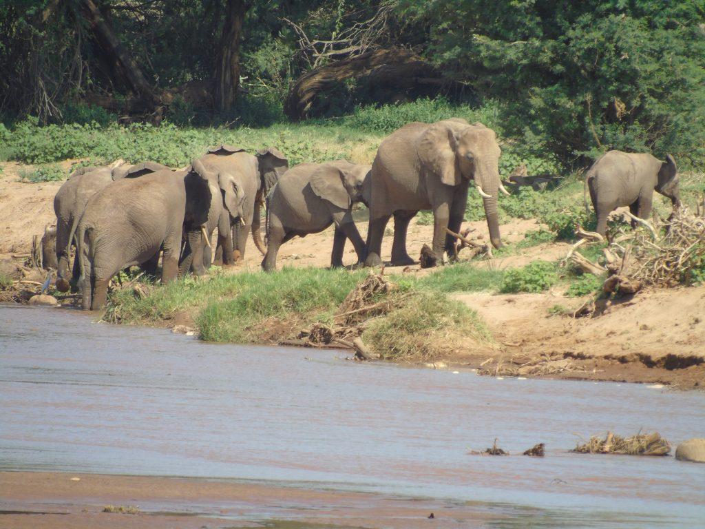 Herd of Elephants on Kenya Safari