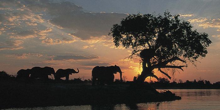 Elephants at sunset in Botswana