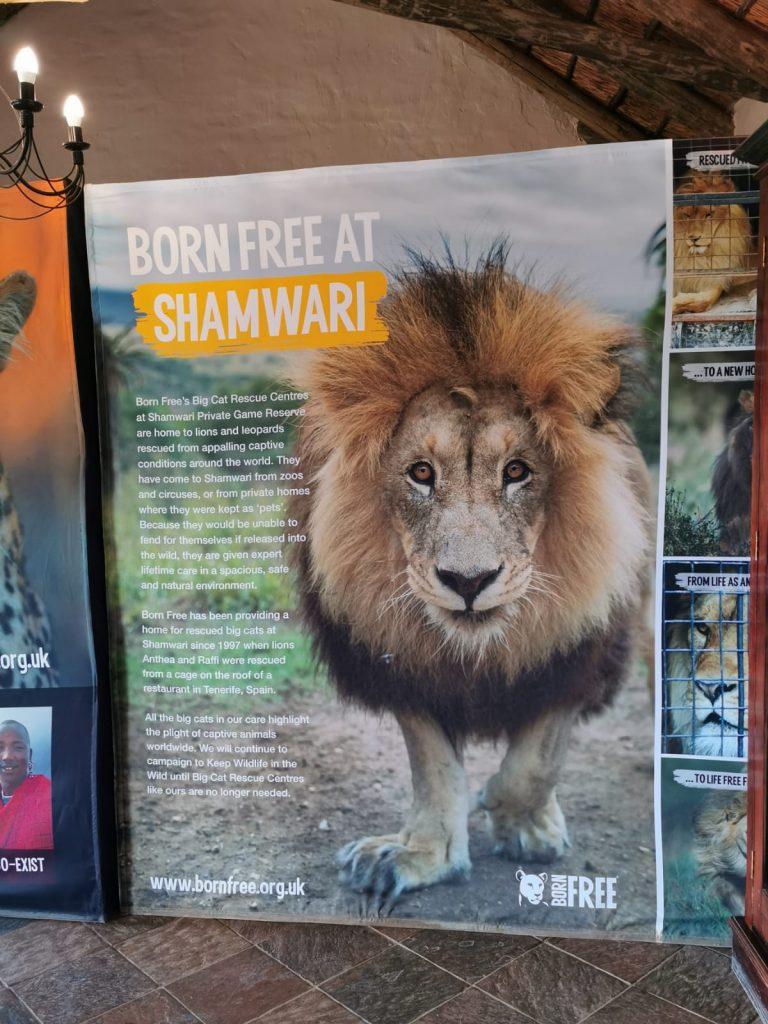 The Shamwari Big Cat Sanctuary