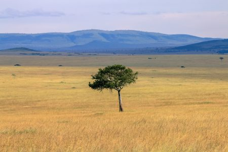 The stunning African Savannah