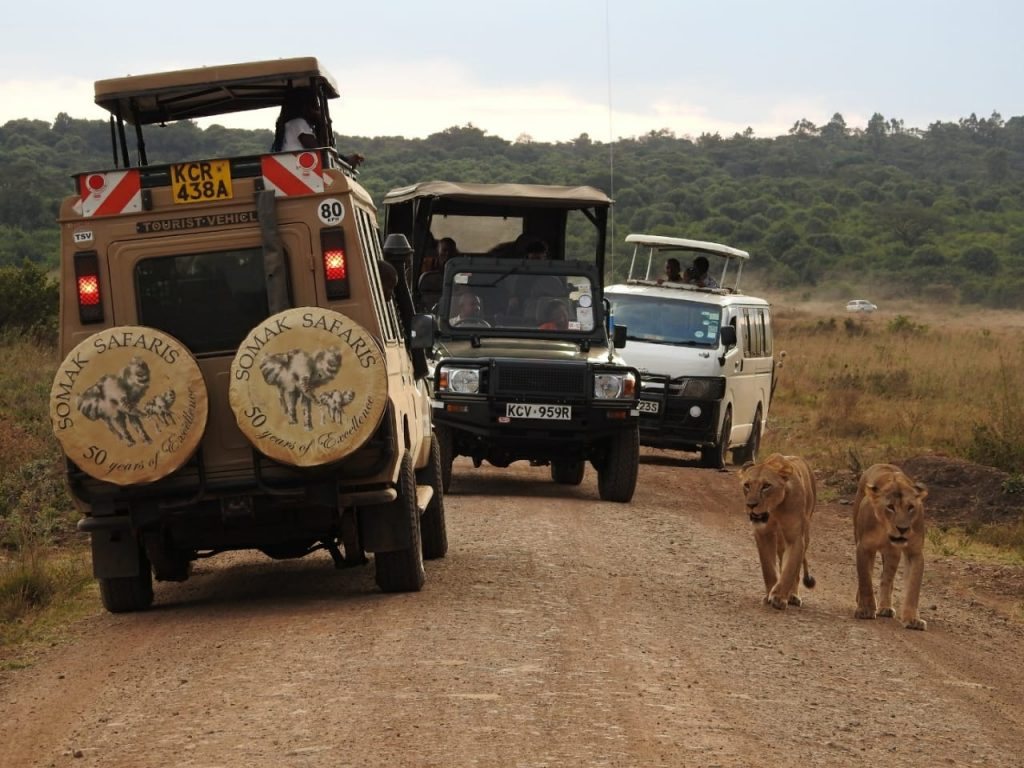 Somak vehicle beside two lions